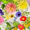 「ふくしまの花オリジナルストール」限定販売会